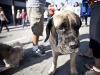 dogs-of-silver-lake-jubilee-201207